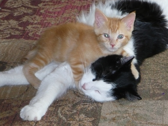 """This has nothing to do with anything, just a blatant """"awwwwhh"""" moment."""